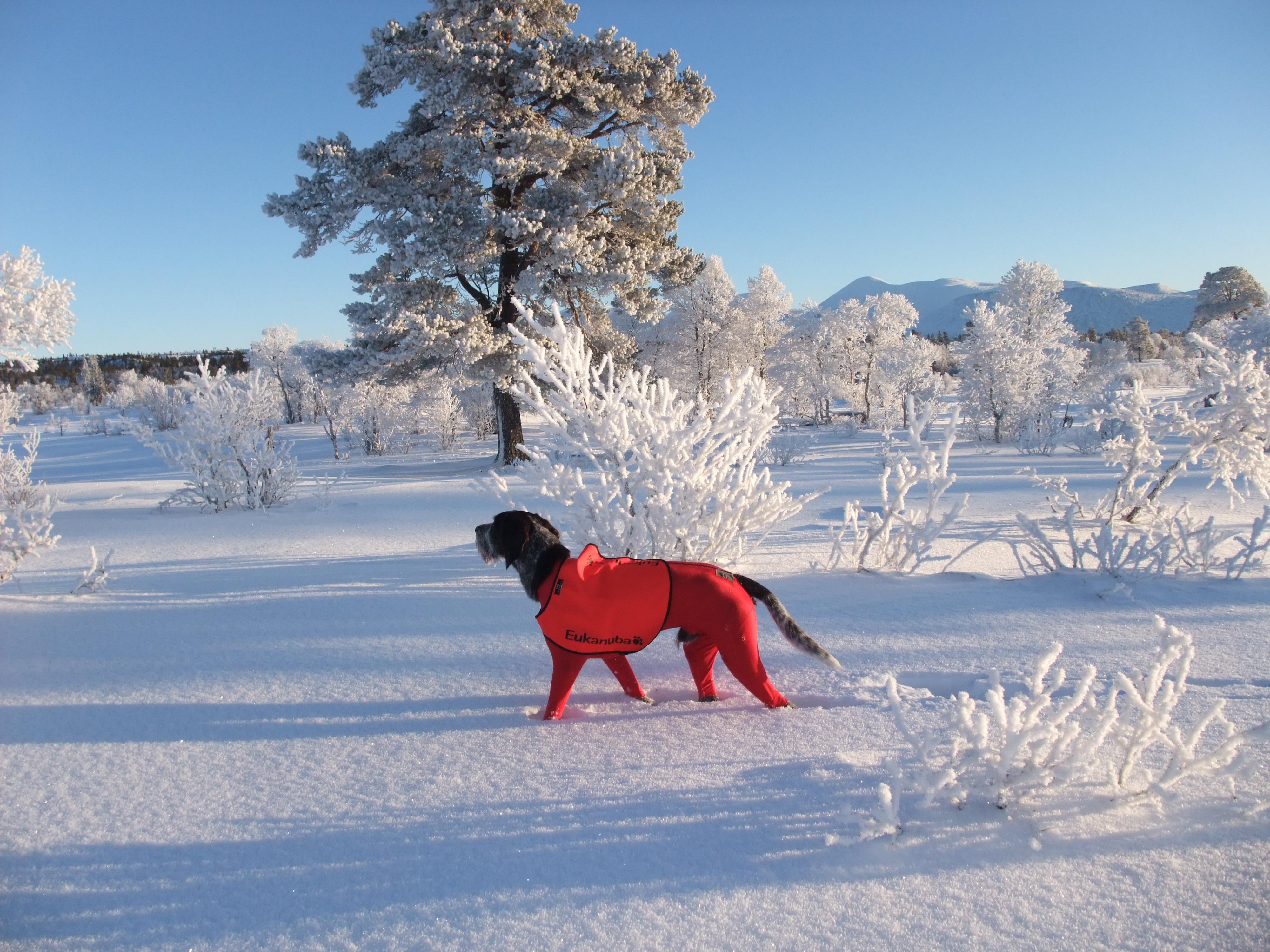 Skal du på vinterprøve med din fuglehund?