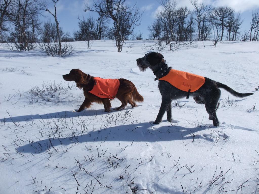 Vinterstid kan også by på mange spennende situasjoner.